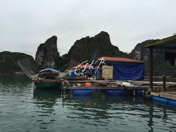 Floating houses in Ha Long Bay